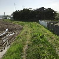 ゴールデンウィークの後半は農作業。