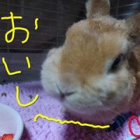 いちご食べて良い顔しるココ(^^)