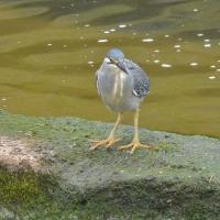 淀川の鳥たち!