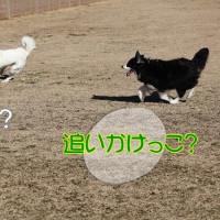 ♪追いかけっこ?♪