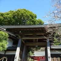「梅・荏柄天神社」/鎌倉(2017早春)