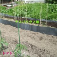家庭菜園 3