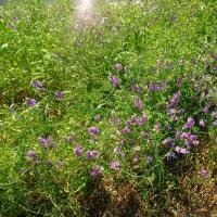 土手の草花