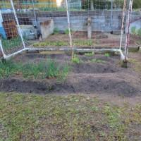 3月の 家庭菜園