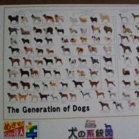 犬の系統図
