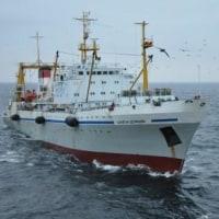 ロシア漁船はスケトウダラ原料利用の歩留りを上げるため肝臓を加工する