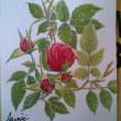 春の終わりごろ描いた 水彩画