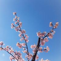ブログニッ ^ ^ は 小さな春が 詰まってる