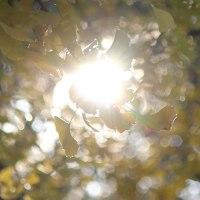 神無月二十六日、公孫樹― Requiem