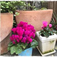 手作りレンガ花壇 Part 2