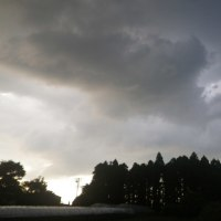 コールラビ大きくなる、雨降りそうで降らず