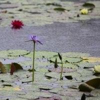 雨だから行く水の庭 ~ モネの庭から(その292)