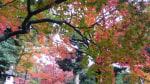 駒込駅 旧古川庭園の紅葉