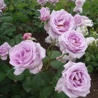 柳が崎湖畔庭園(イングリッシュガーデン)に咲く花は変化していく!