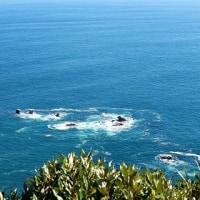 ニュージーランド南島 ハースト峠