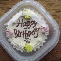 愛犬 まめの誕生日