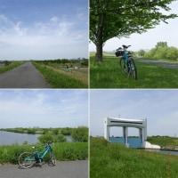 荒川土手サイクリング道