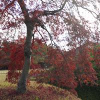 後楽園と衆楽園の紅葉