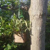 庭の木に吊るしました