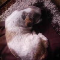 むーちゃんは夢を見ているようですし、寝言を言います
