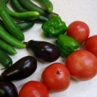 夏野菜のしんがりはモロヘイヤ