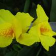 夏の花の悲喜こもごも