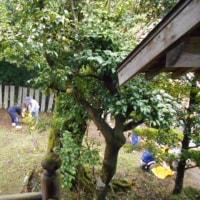 6月の日記25 岩戸別神社清掃と注連縄作り
