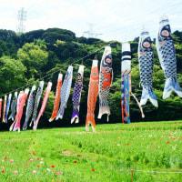 横須賀 くりはま花の国。