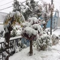 積雪20㎝越え