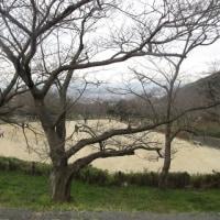 安部山公園でゆっくり 170115