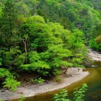 渓流・新緑の針畑川