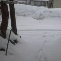 今年も小雪?