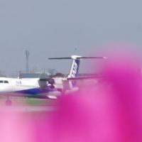 ツツジの花咲く松山空港♪(4月29日)