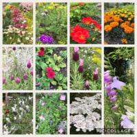 今は盛りの花園