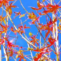 紅葉と鳥in大津市