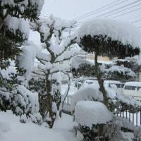 2 2019(H29)年 新年の大雪に遭遇  前庭では