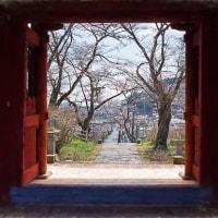 2017.04.07 鹿沼市 千手山公園 千手院: 山門から桜並木の参道を見下ろす風景
