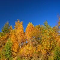 秋の空に輝く