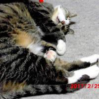 【動画】眠い💤風太と、ご近所猫たち~♪