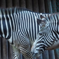 多摩動物園のお友達