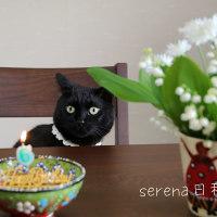 セレナ7歳になりました(=^・^=)