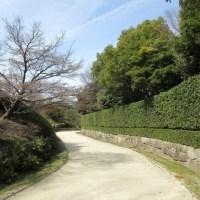 白鳥庭園 青空に映える梅の花