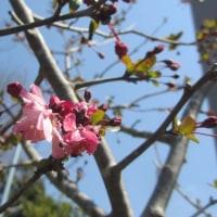 咲き始めた花