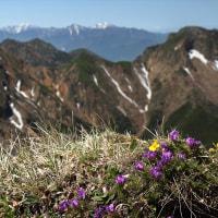 八ヶ岳 ~花と頂を目指す~ #4
