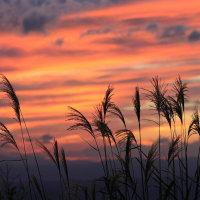 夕日とススキ2016.10.13