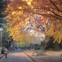 東京紅葉(7)東博庭園