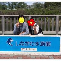 ◯水族館に行く