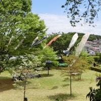 町田ボタン園に行ってきました