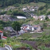棚田のコイノボリ撤収