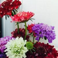 アトリエのお花🌷